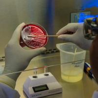 Image of CDC swab with petri dish
